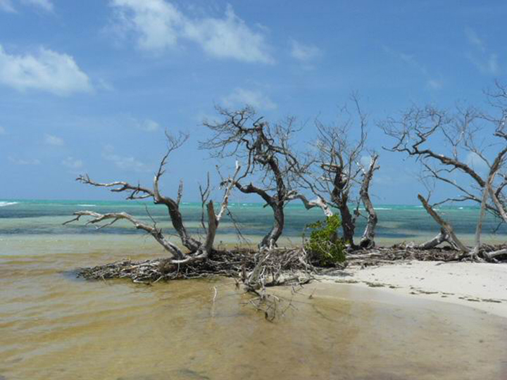 Dry remains of trees stand along a sandy beach as waves break along the horizon.